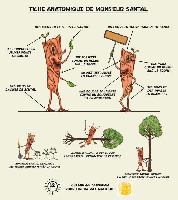 Fiche anatomique 3 : Monsieur Santal