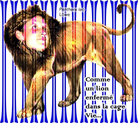 Comme un lion